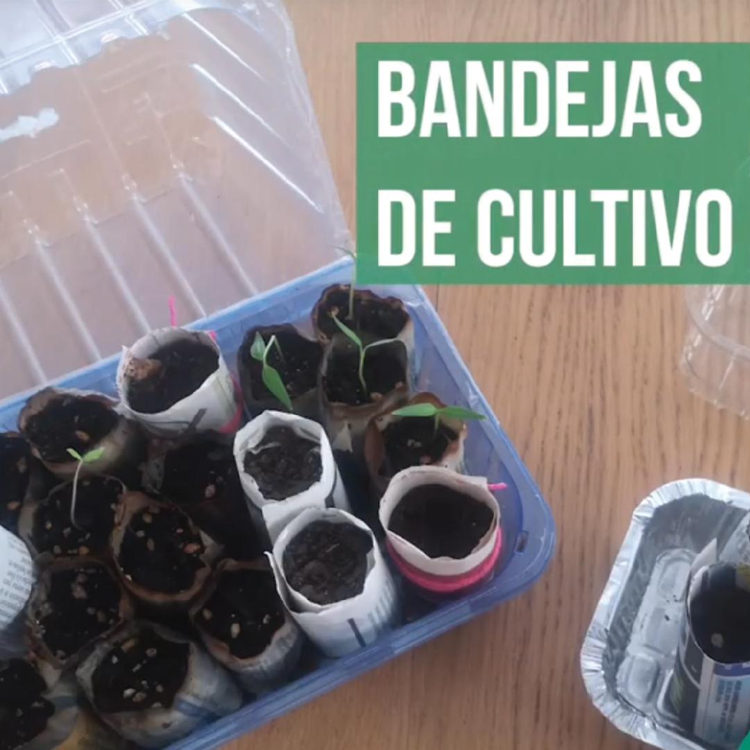 Bandejas de Cultivo